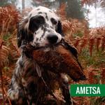 Ametsa_01
