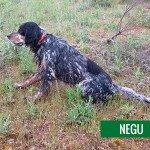 Negu_01